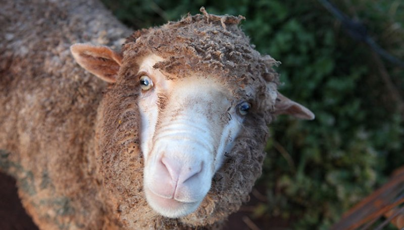 This Farm Sanctuary Is on a Mission to Teach the World About Compassion (PHOTOS)