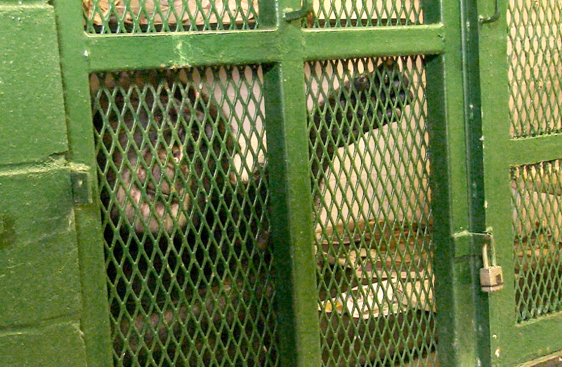 Making the Legal Case for the Rights of a Chimpanzee