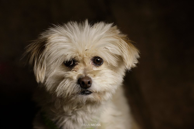 Photographer Captures Beautiful Portraits of Animals Looking for Forever HomesPhotographer Captures Beautiful Portraits of Animals Looking for Forever Homes