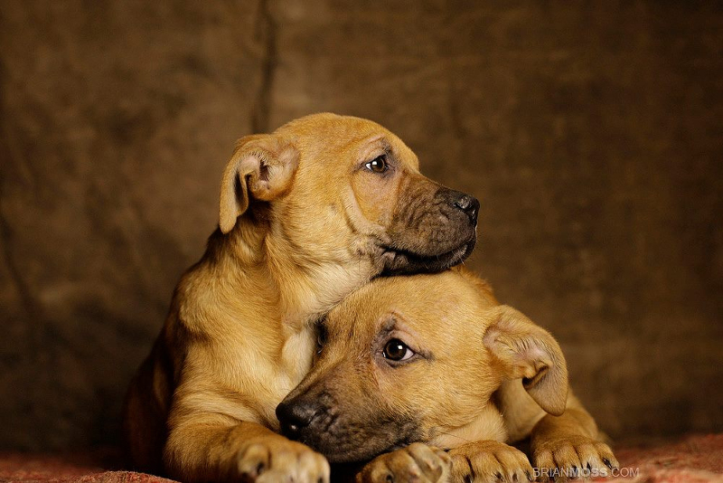 Photographer Captures Beautiful Still of Animals Looking for Forever Homes