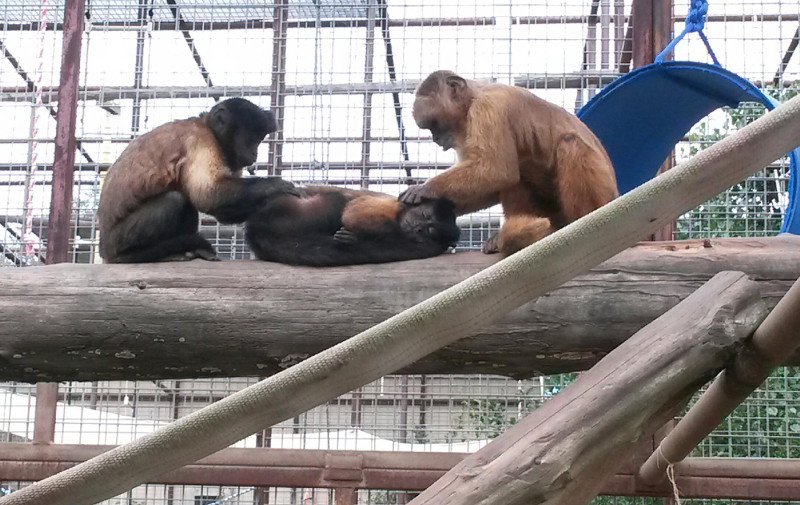 Happy Father's Day to These Nonhuman Primate Dads