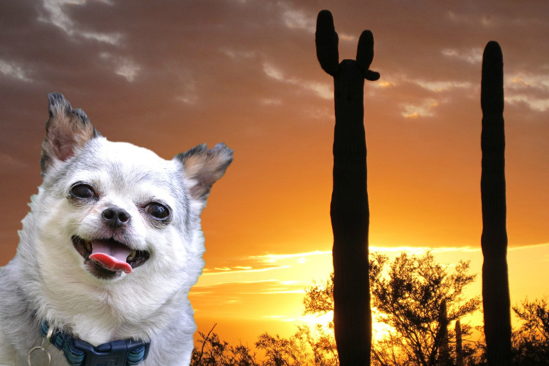 Flat Teddy Takes on the World to Spread the Word About Puppy Mills