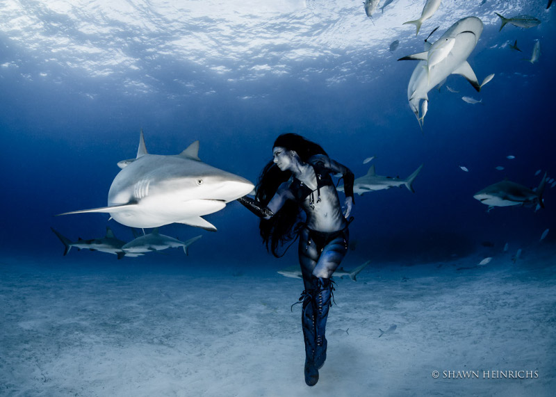World's First Woman Dances with Tiger Sharks (VIDEO)