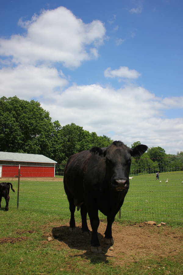 From Backyard Butcher to Basking in the Sun, Daisy and Lucky Find Happiness on SASHA Farm