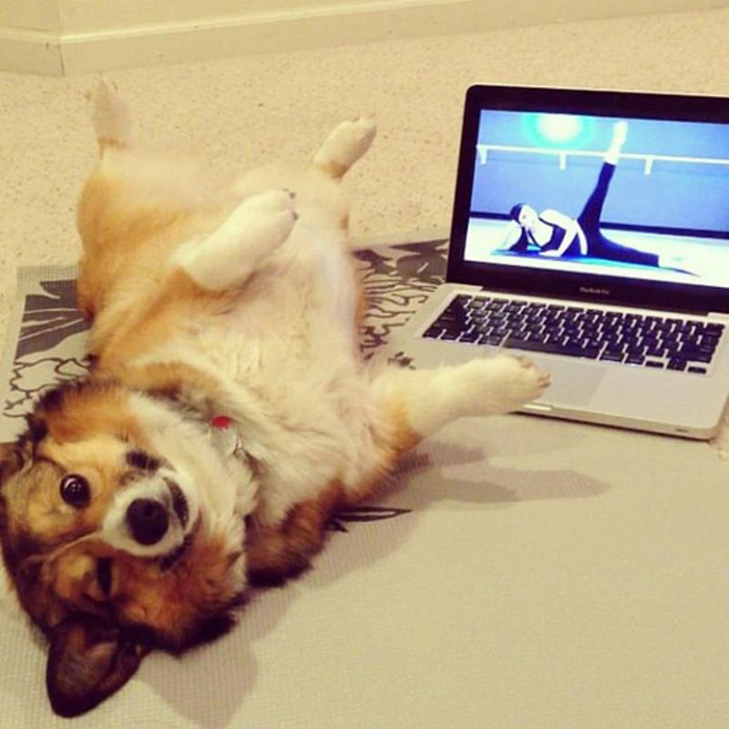 Dog Yoga 1