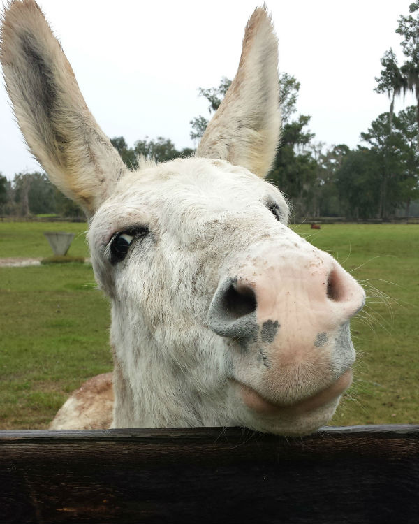 10 Photos of Adorable Rescue Farm Animals at Kindred Spirits Sanctuary