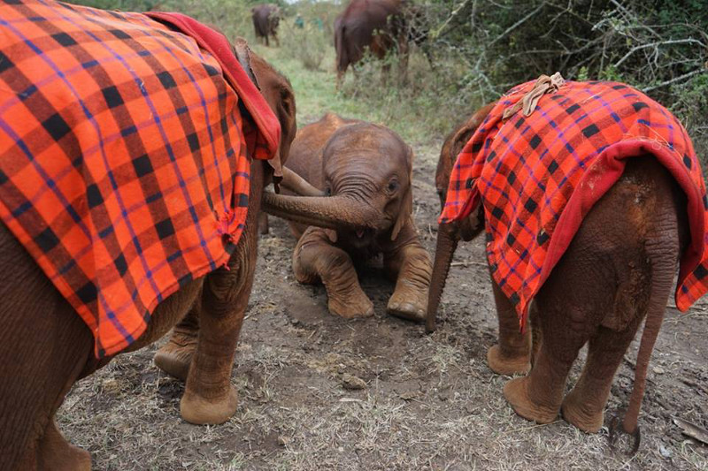 Rescued From a Well, Kauro the Elephant Takes Life by the Trunk (PHOTOS)