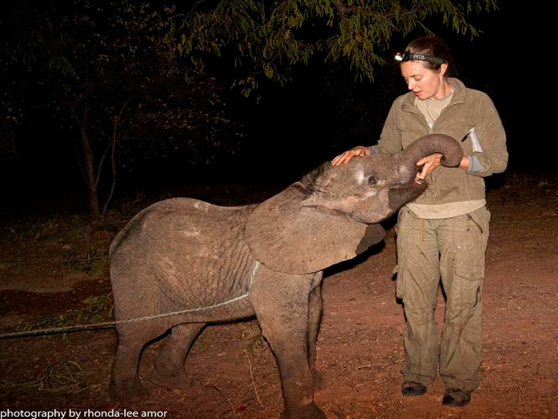 Kavala the Orphaned Elephant Calf is Taking Recovery One Step at a Time!