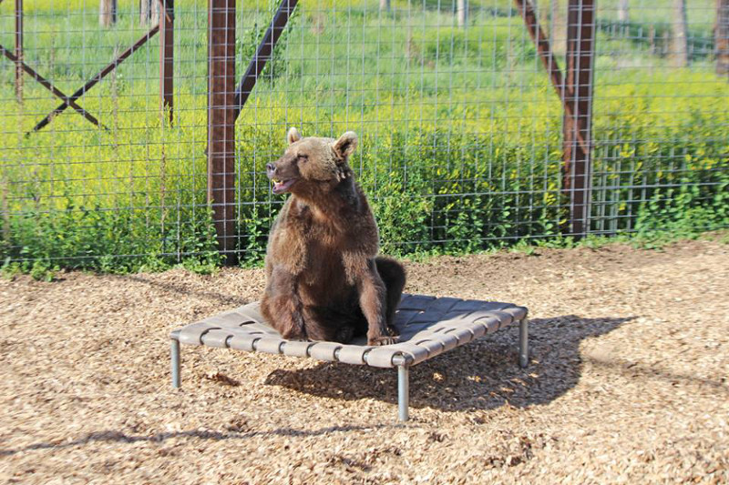 Rescued From a Strip Mall Tourist Attraction, 17 Bears Find a New Life at the Wild Animal Sanctuary