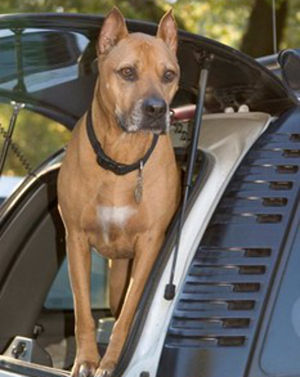 5 Hero Dogs You Need to Know