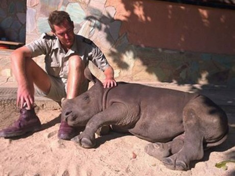 Baby rhino refuses to sleep alone after mother was brutally murdered by poachers