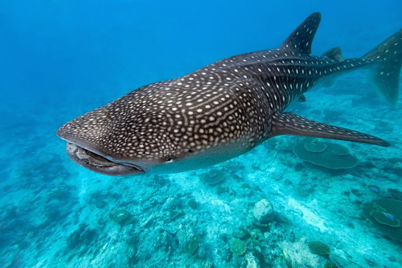 5 Species We Stand to Lose if Coral Reefs are Destroyed