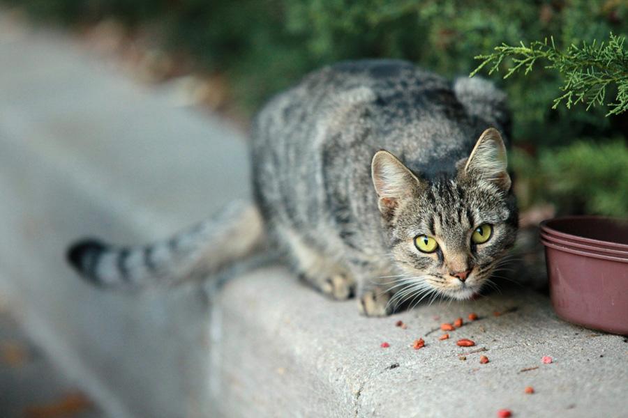 Jason Putsche Photography - Comm Cats 03