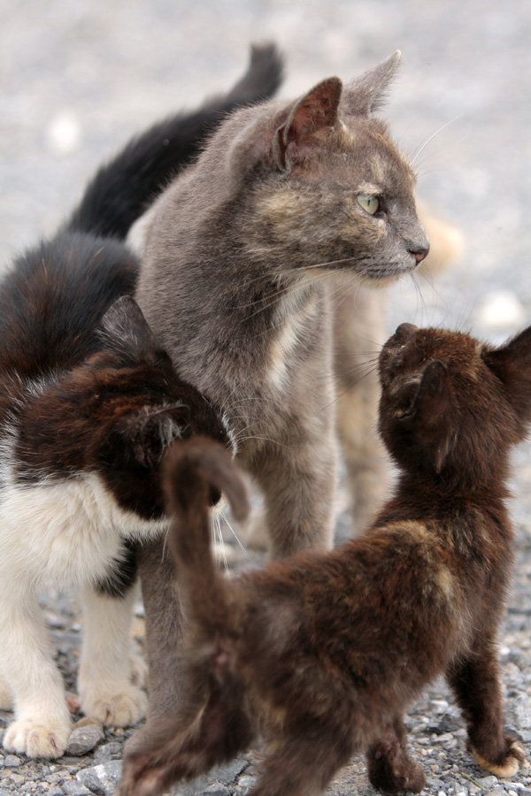 Jason Putsche Photography - Comm Cats 04