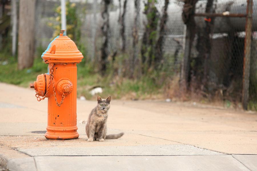Jason Putsche Photography - Comm Cats 06