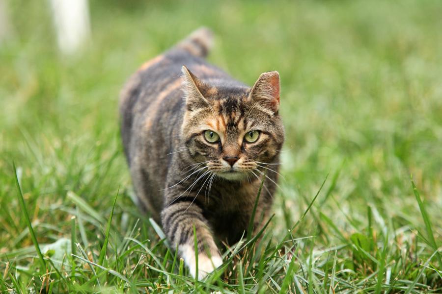 Jason Putsche Photography - Comm Cats 08