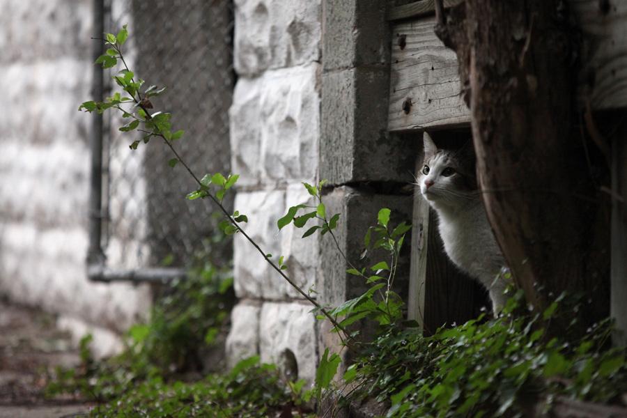 Jason Putsche Photography - Comm Cats 13