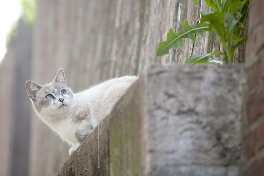 Jason Putsche Photography - Comm Cats 15