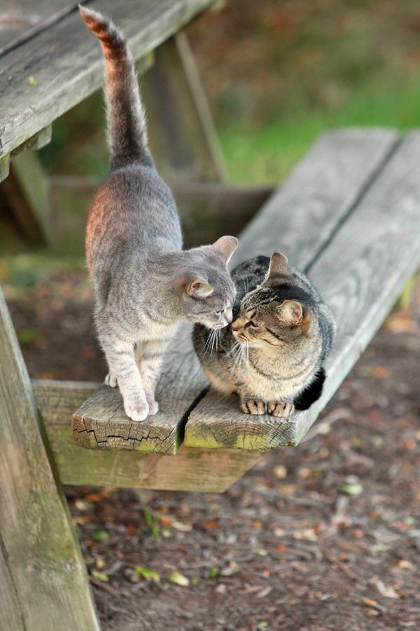 Holabird Cat Colony
