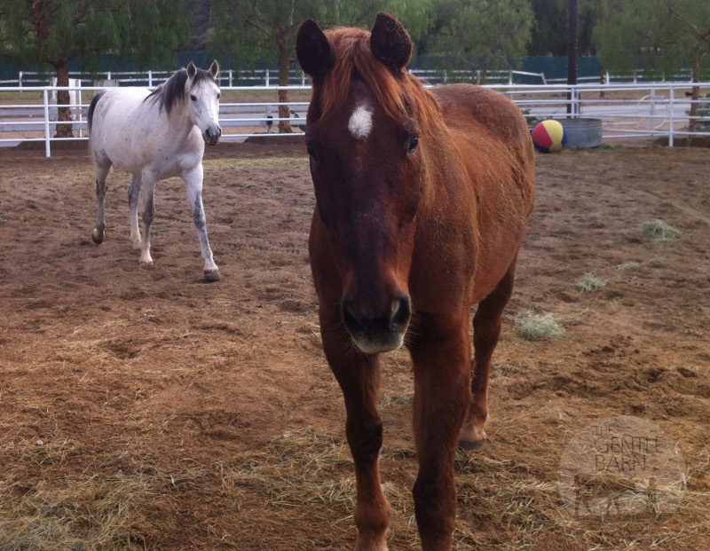 Rescued from a Ravine Andrew and Patrick are now Thriving at The Gentle Barn