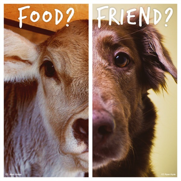 What is Animal Cruelty? Well, It Depends...
