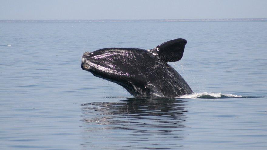Ocean Planning or Pandering–Obama Administration OK's Seismic Testing Along U.S. East Coast