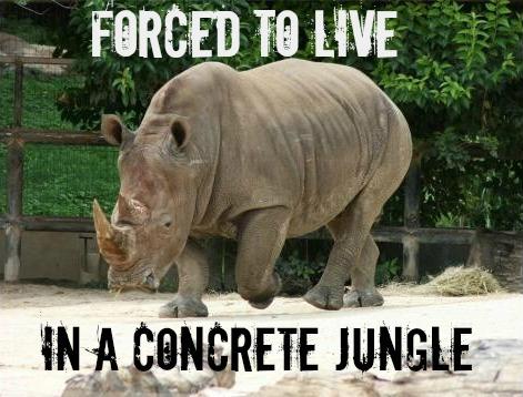 EXPOSED! The San Antonio Zoo: One of the Worst Zoos in America