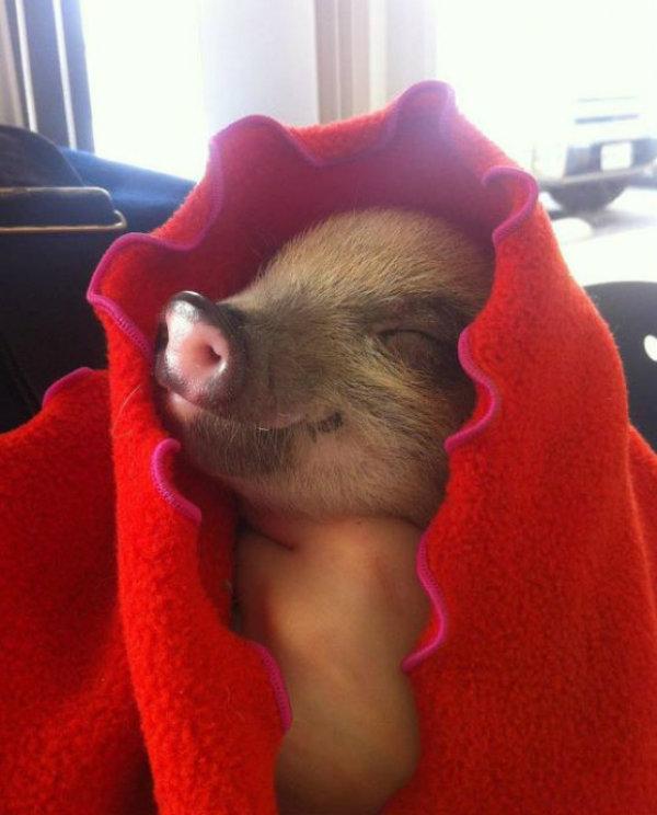 10 Times Pigs Were Cuter than Bacon Tastes