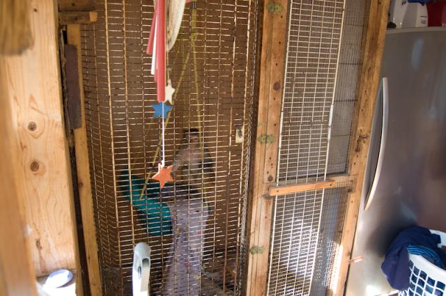 One Monkey's Journey From an Indiana Cage to a Texas Sanctuary
