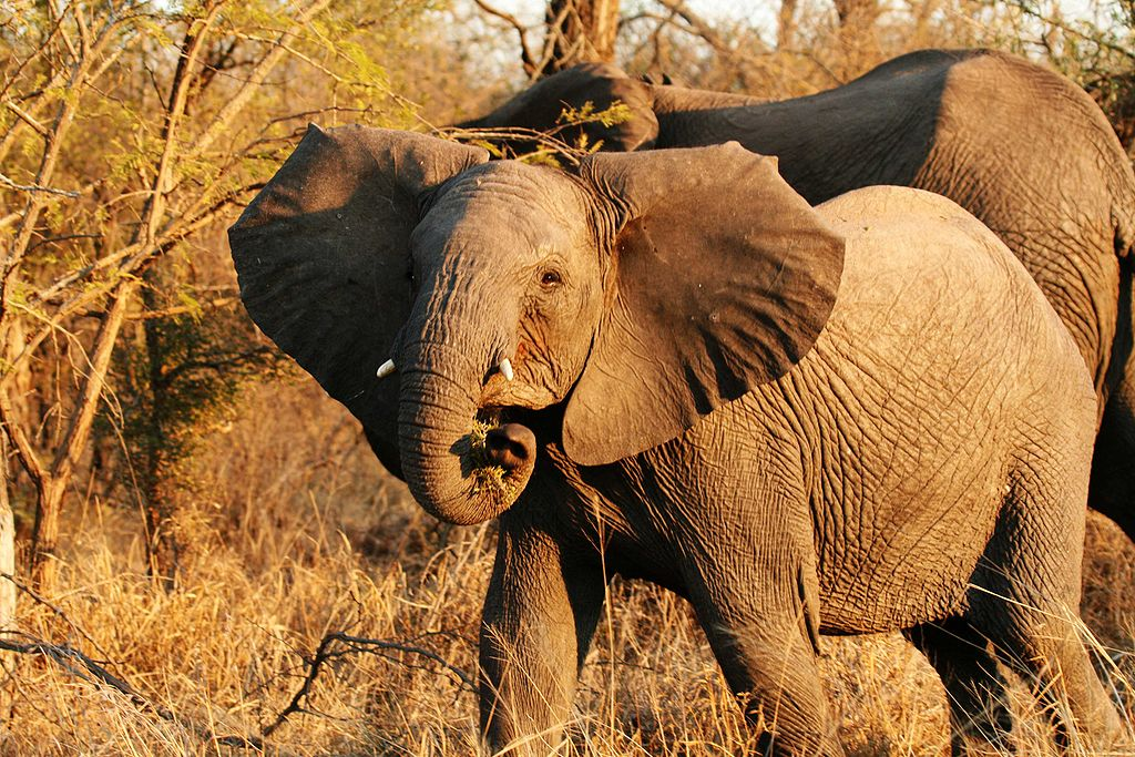 What the Elephants Know: the Burden of Sentience