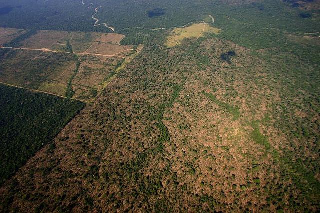 X shocking photos that illustrate deforestation