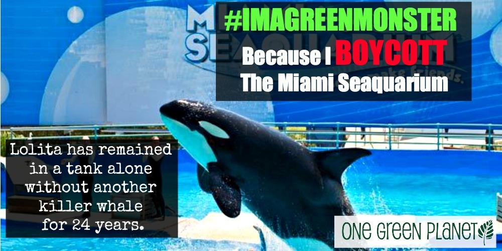 EXPOSED! The Miami Seaquarium: Cruel Animal Shows Must Stop!