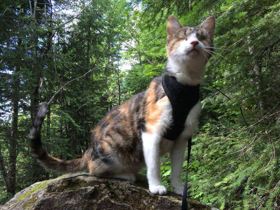 This Cat is Blind, But Loves to Go Hiking and Explore the Great Outdoors