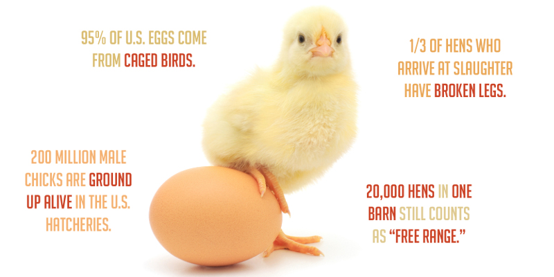 You Will Never Eat Eggs Again After Reading This
