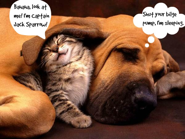 Dogs and Cats Living Together. Mass Hysteria! Take a Look at These Unlikely Companions.