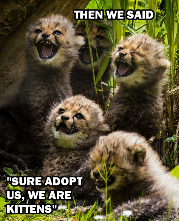 Why Wild Animals Yes Even The Adorable Ones Make Terrible Pets One Green Planet