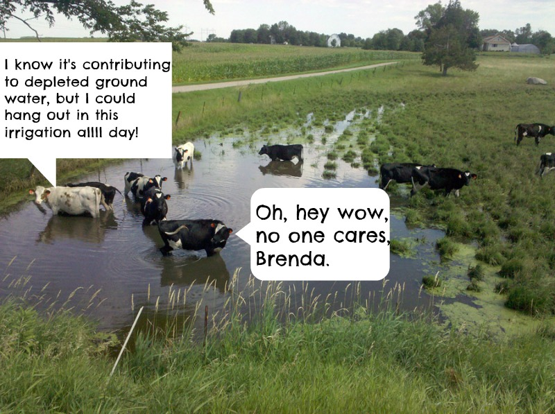What Could we do With All the Land Cattle Graze on?