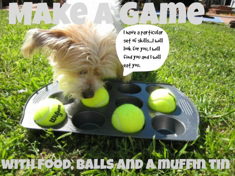 15 Life Hacks That Will Make you the Coolest Dog Parent at the Bark Park