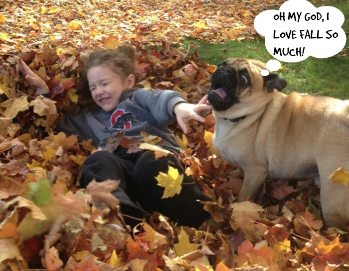20 Reasons why Raising Your Kids With a Pet is Important.