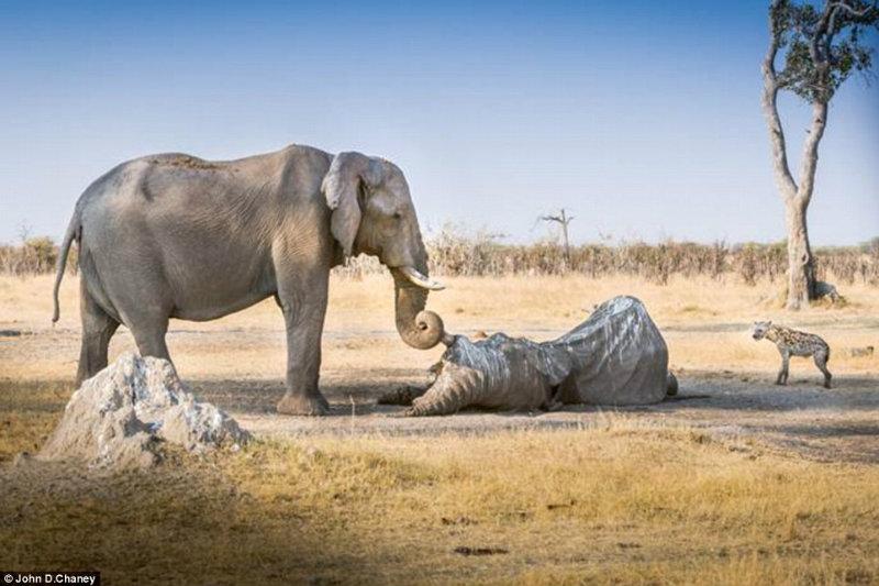 elephant sadness.jpg