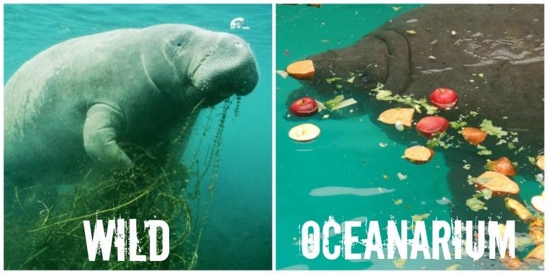 EXPOSED! The Miami Seaquarium: Cruelty That Overshadows Genuine Conservation.