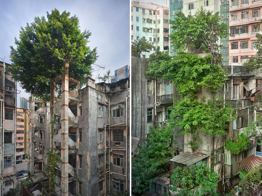 This Is What it Looks Like When Nature Fights Back Against Civilization