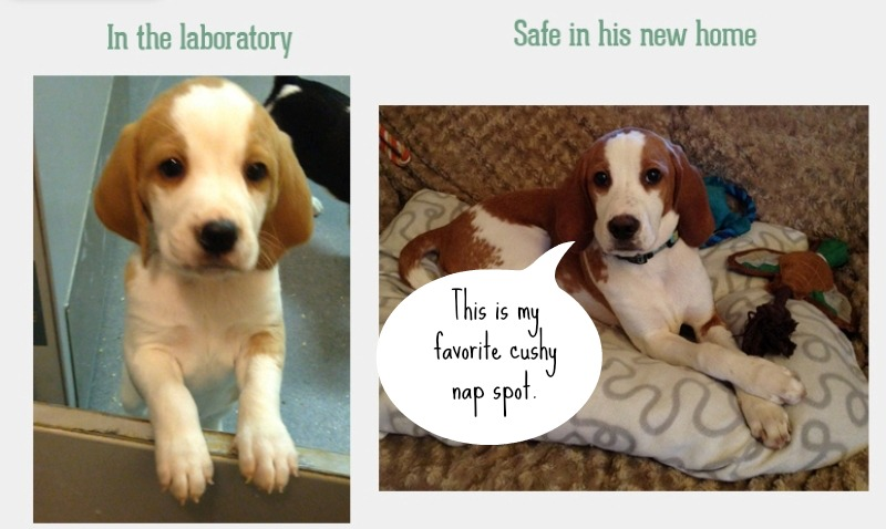 """7 Former Lab Animals That Prove They Are Anything But """"Broken"""""""