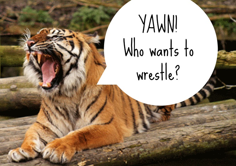 Why Wild Animals Don't Make Good Pets