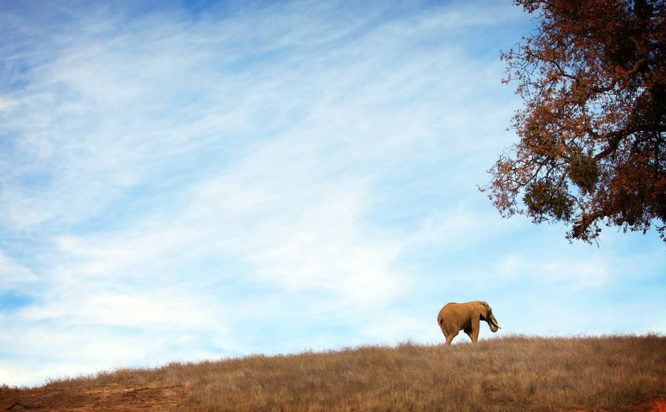 One Year Later, Former Toronto Zoo Elephants are Thriving at Their Sanctuary Home