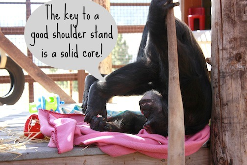 Getting Zen With the Chimpanzees of Chimp Sanctuary Northwest