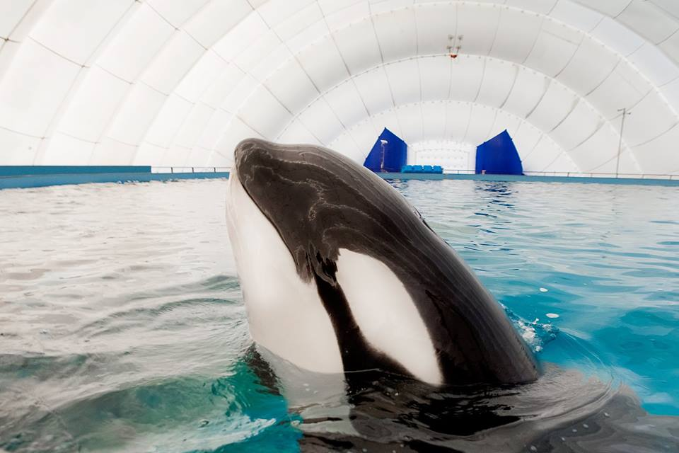 Russian Orcas