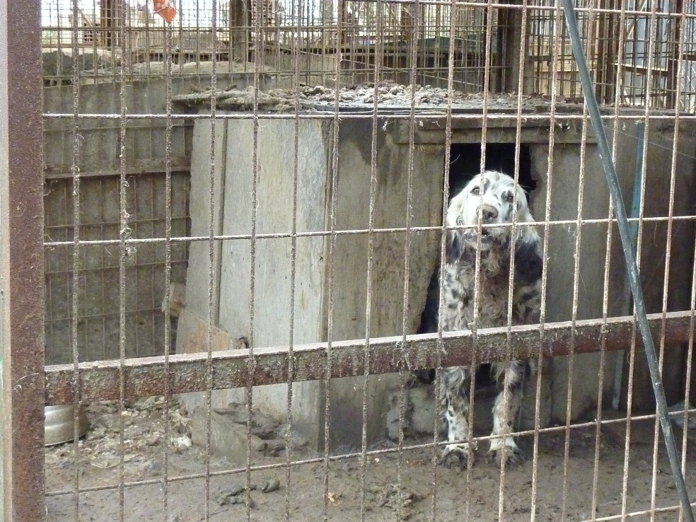 Why We are not Campaigning for Regulation of the Dog Meat Trade