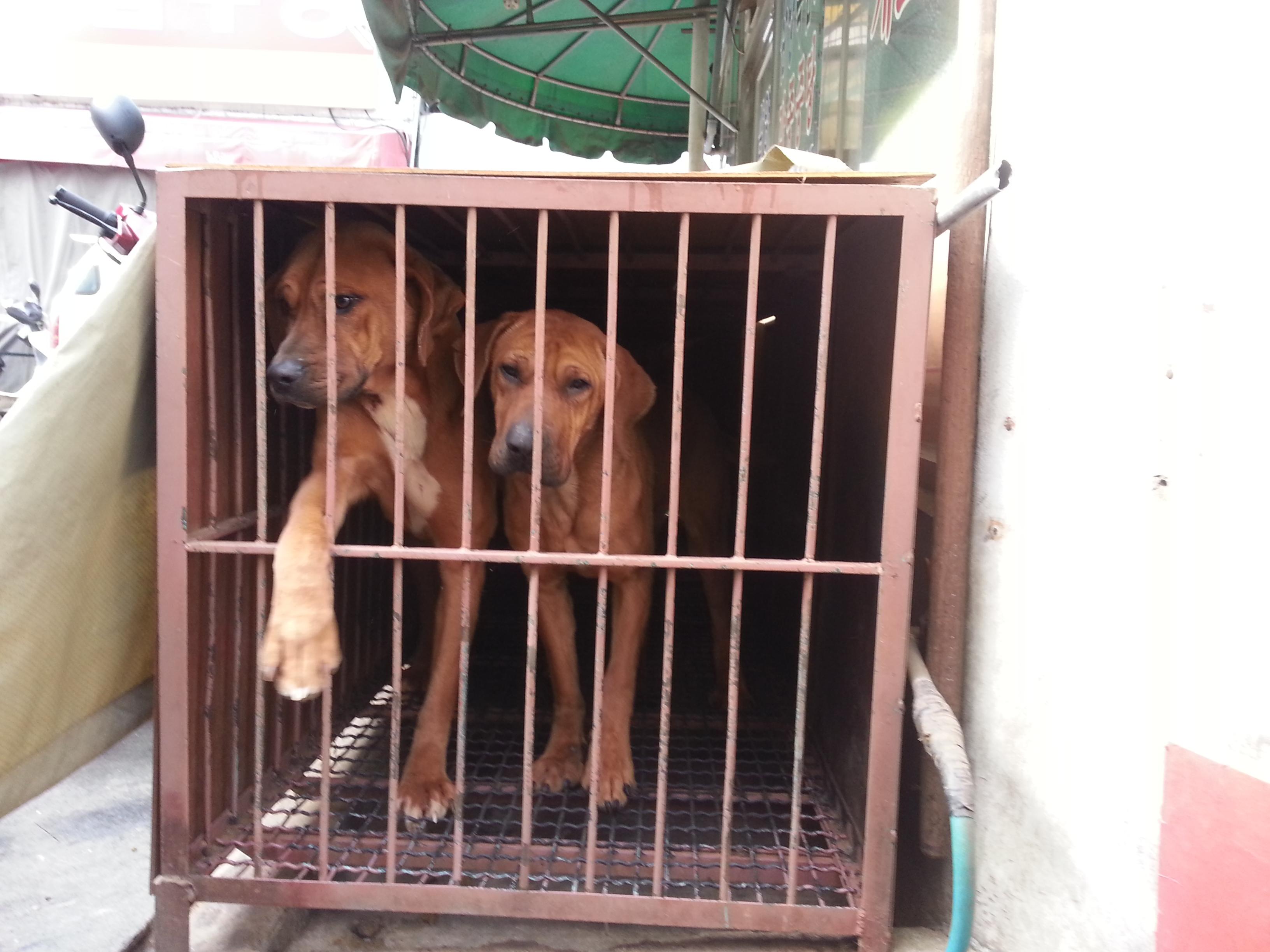 South Korea's Dog Meat Question