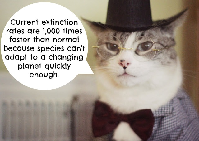 Cats and Climate Change